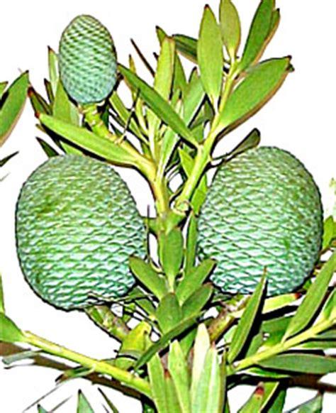 Medicinal Plants Essay Example