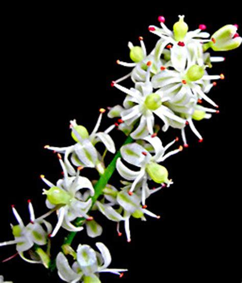 Essay on medicinal plants in hindi